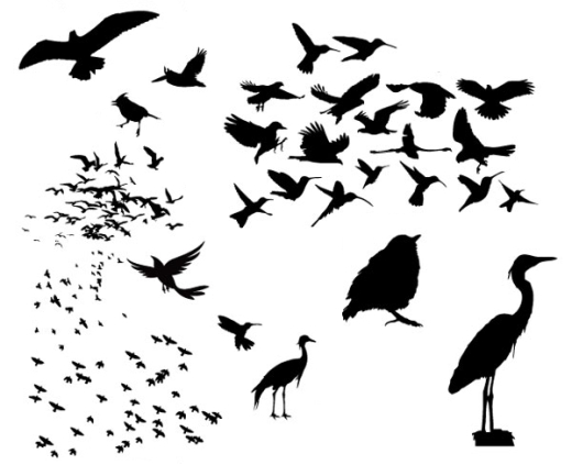 silhouette birds illustration