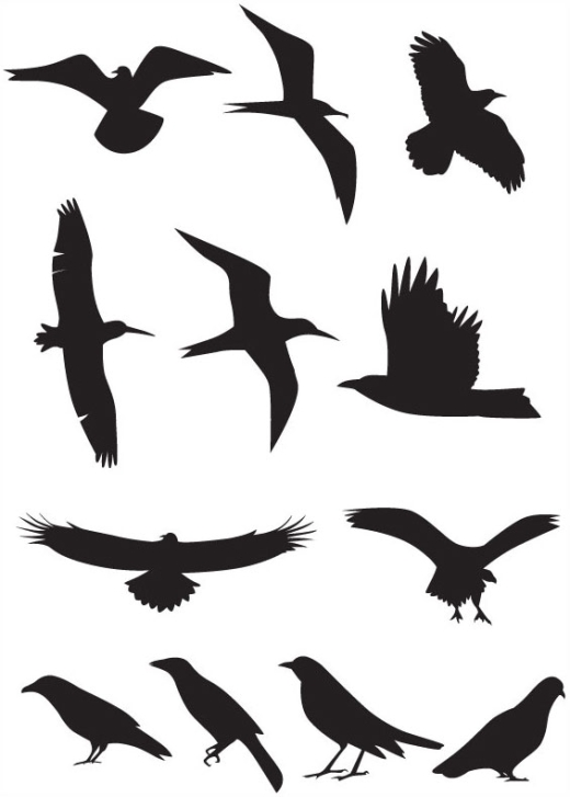 vector silhouette-birds