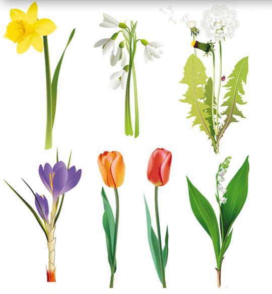 vector-flowers